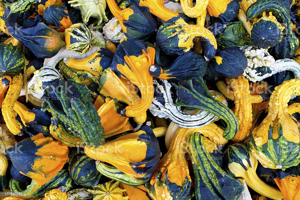 Gourd collection royalty-free stock photo