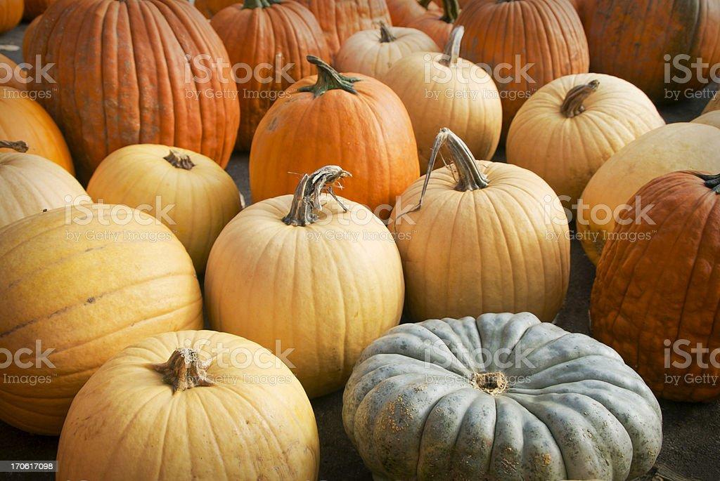 Gourd Family royalty-free stock photo