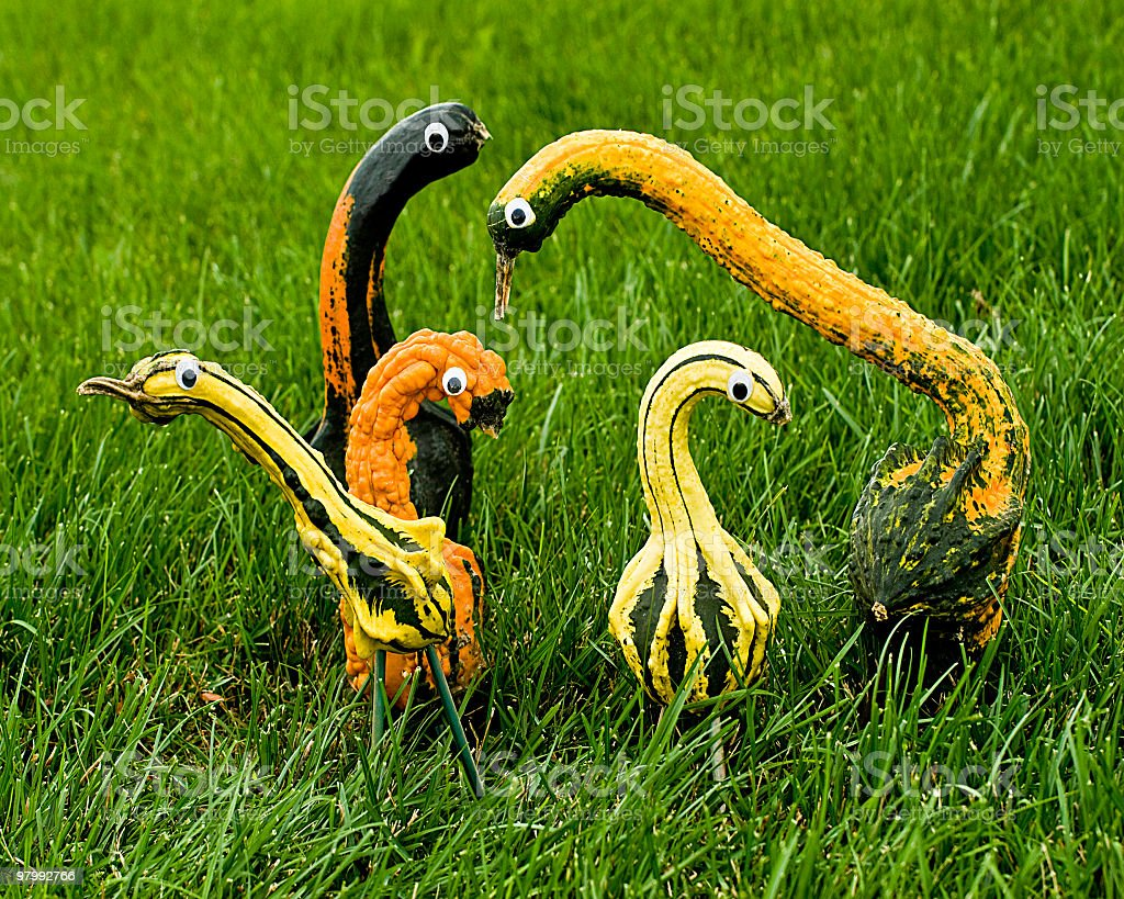 Gourd Family royalty-free stock photo