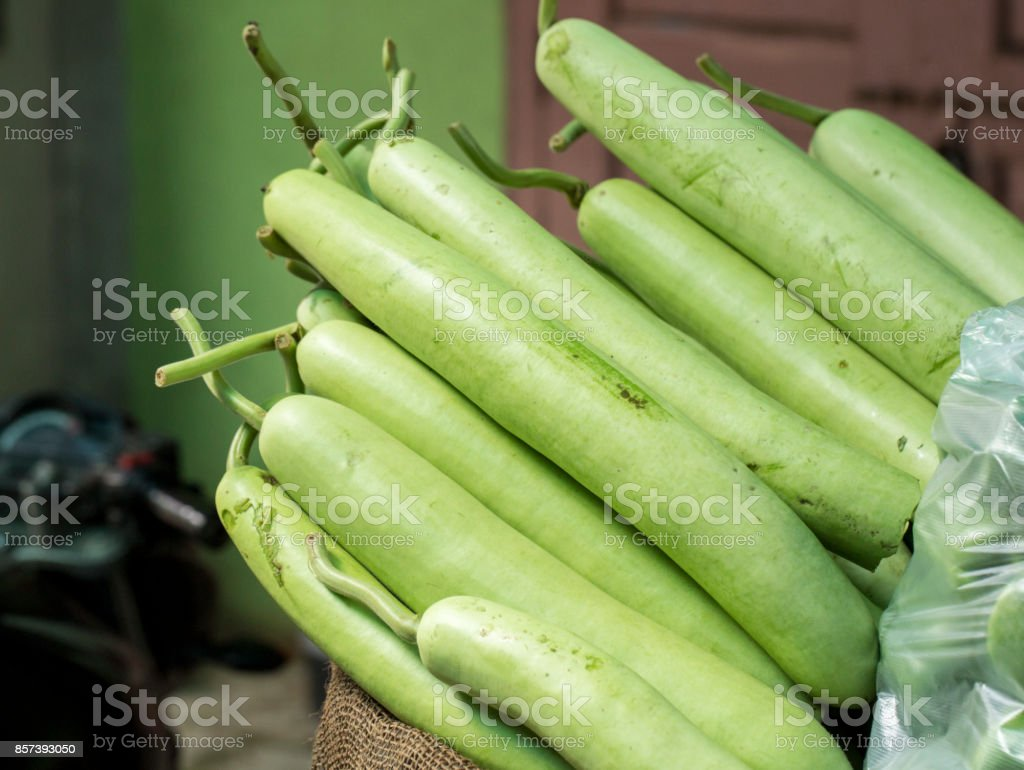 Gourd or Dudhi stock photo