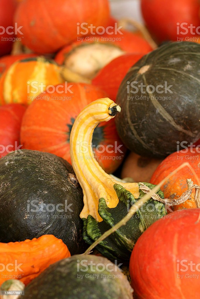 gourd royalty-free stock photo