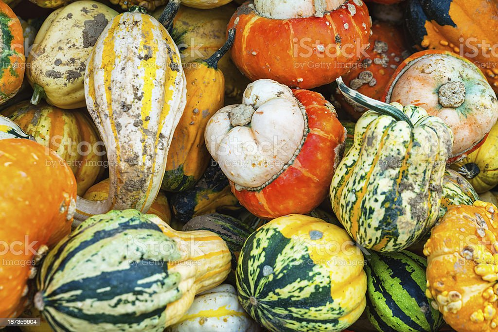 Gourds and pumpkins royalty-free stock photo