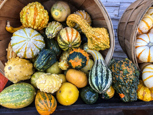 gourds and winter squash - gourd stock photos and pictures
