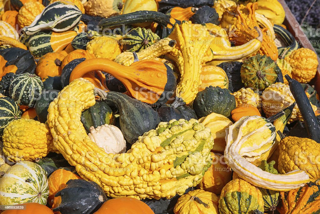 Gourds for Sale at Farmers Market stock photo