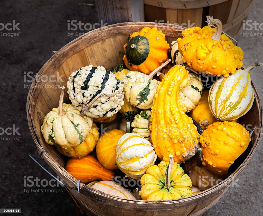 Gourds in basket stock photo