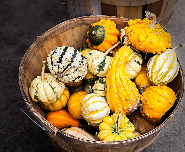 gourds in basket - gourd stock photos and pictures