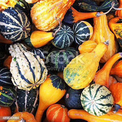 Gourds and squashes of different shapes and colors.