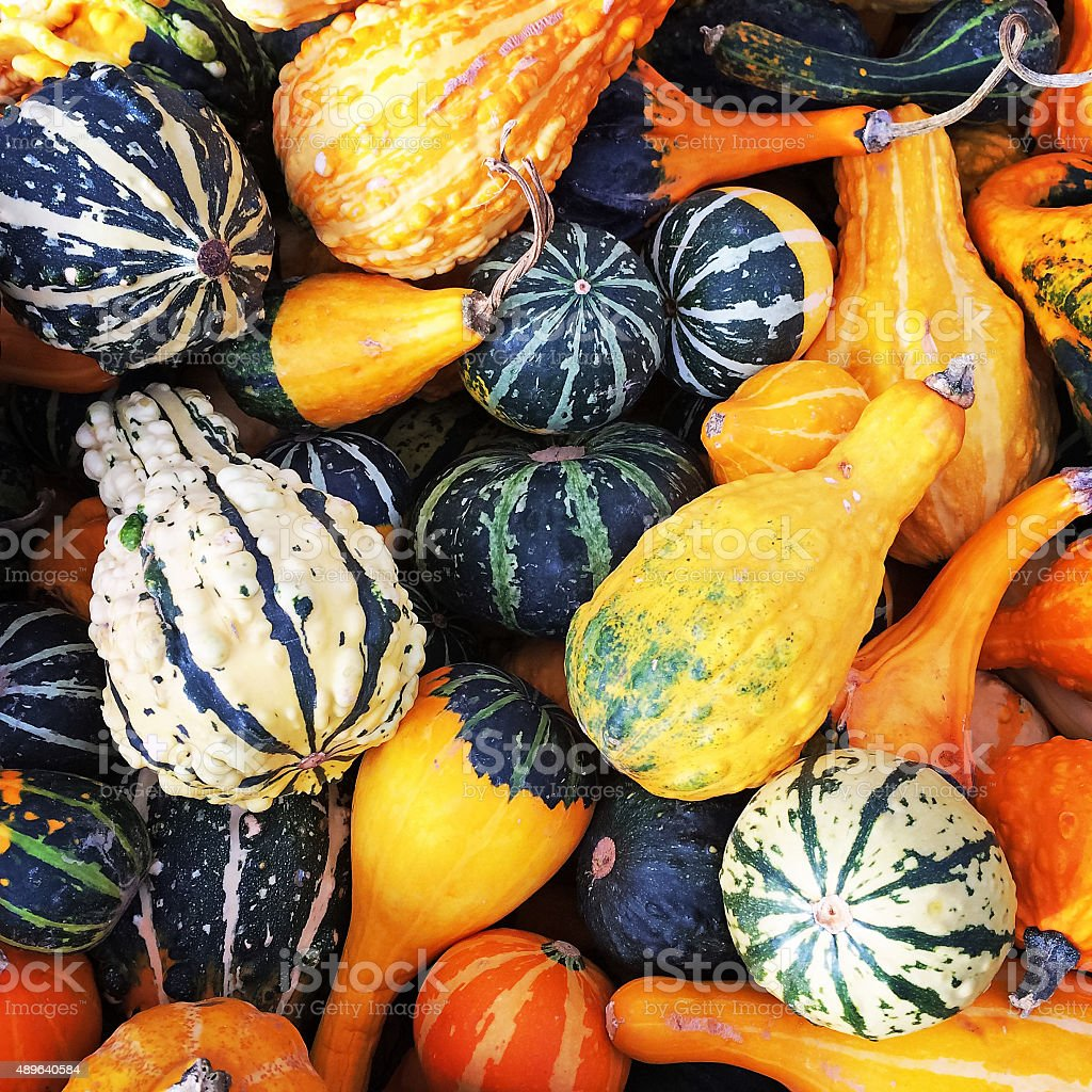 Gourds of different shapes and colors stock photo