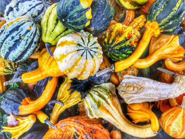 gourds - gourd stock photos and pictures