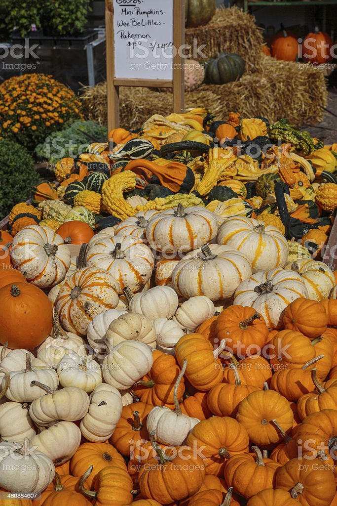Gourds, Pumpkins, and Squash for Sale at Farmers Market stock photo