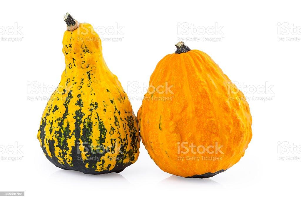 Gourds Pumpkins stock photo