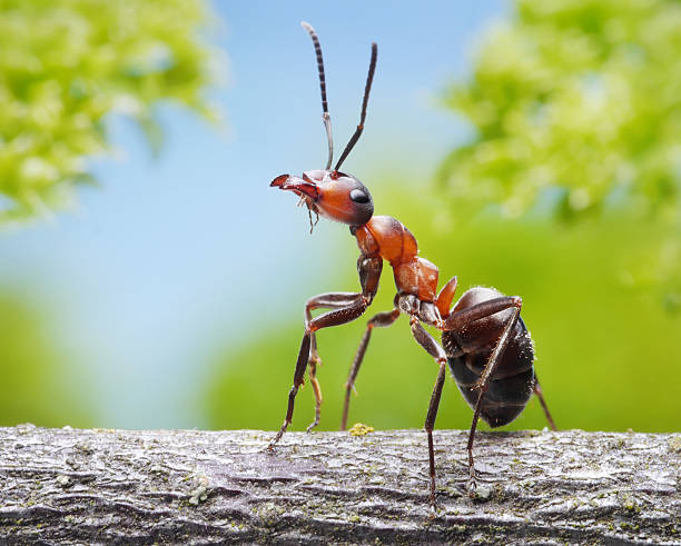 Anmutige ant – Foto