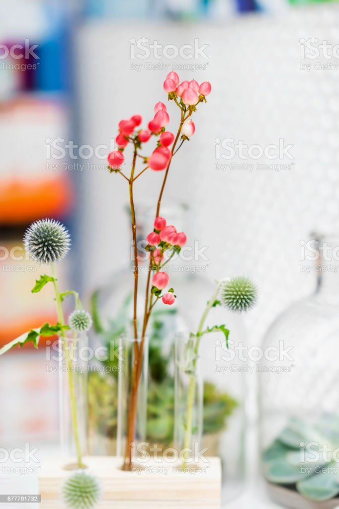 Graceful pink flowers arrangement in glass test tubesstanding, romantic ikebana. Minimalism, elegant composition. Concept of biological research, biotechnology, making perfumes stock photo