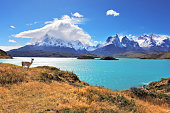 Epic beauty of the landscape - the National Park Torres del Paine in southern Chile. Graceful silhouette guanaco on the lake Pehoe