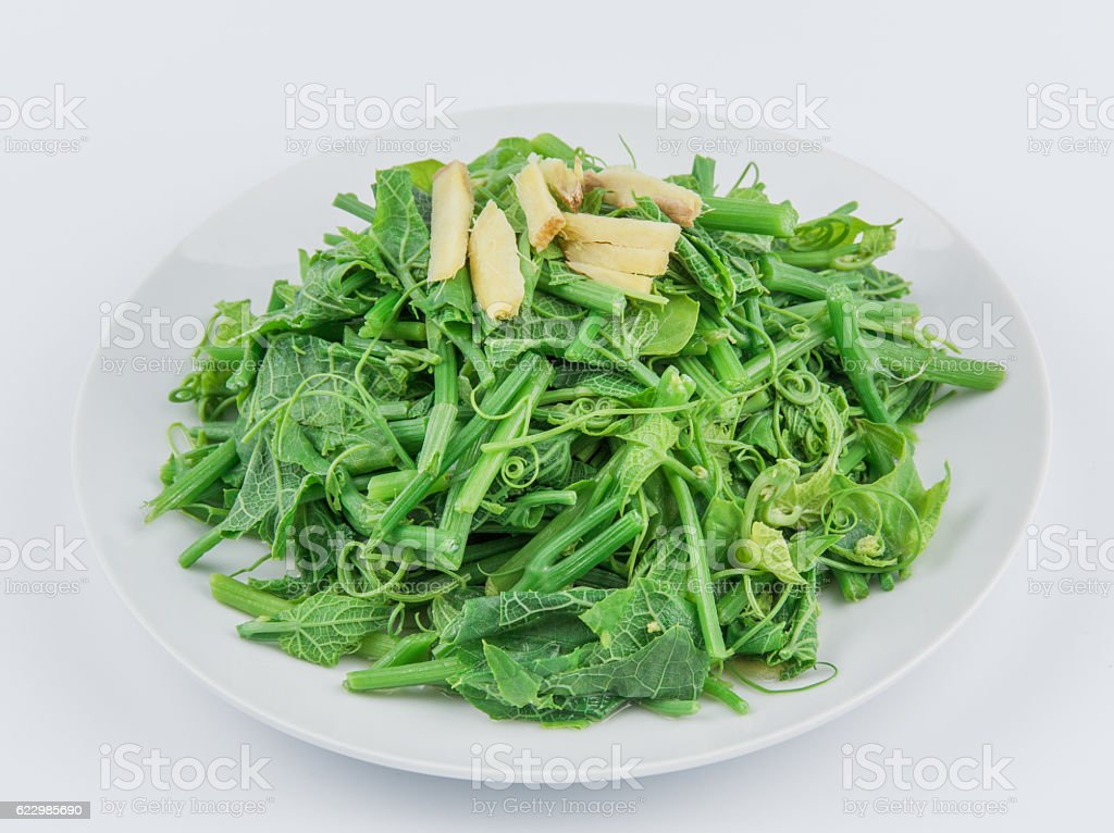 gracilaria stock photo