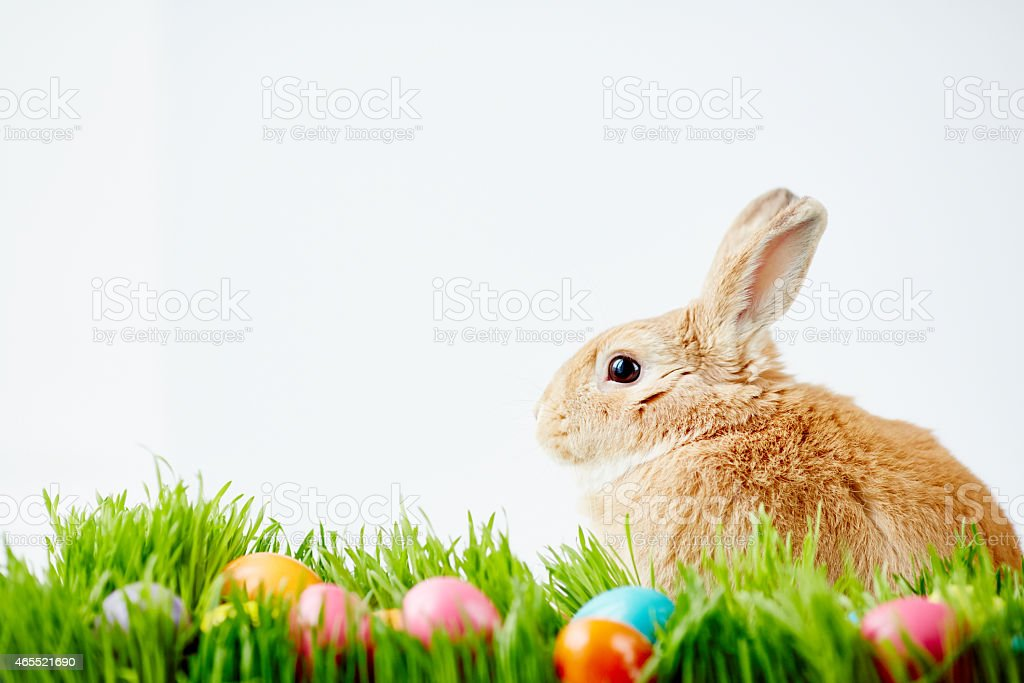 Gracious Easter rabbit stock photo