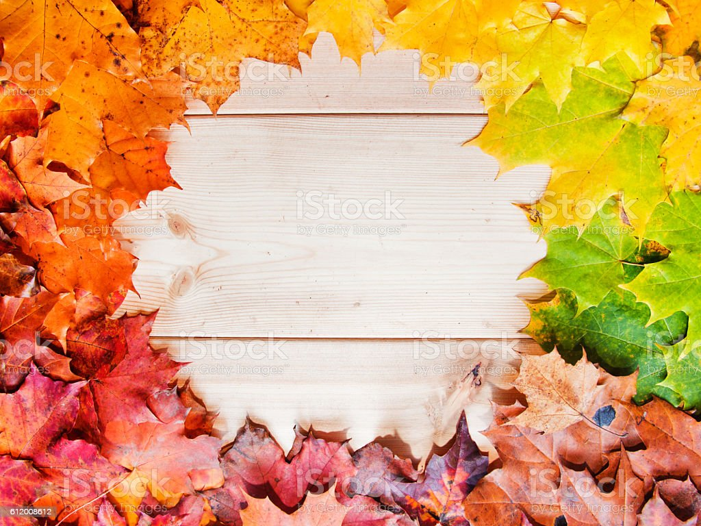 multicolored fall maple leaves. Autumn gradient frame