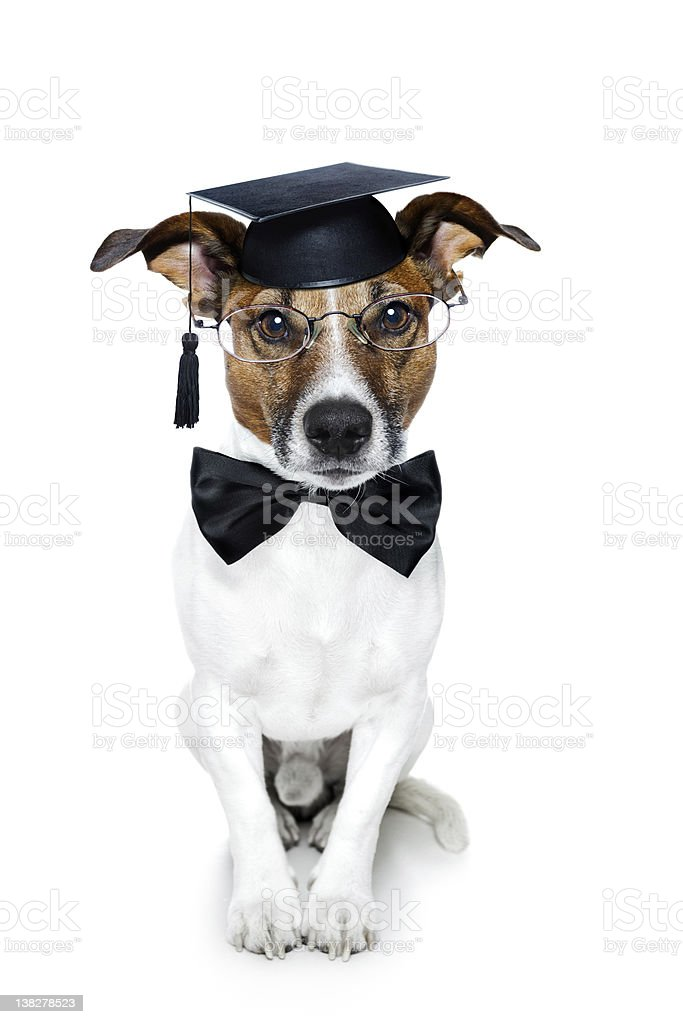 graduated dog royalty-free stock photo