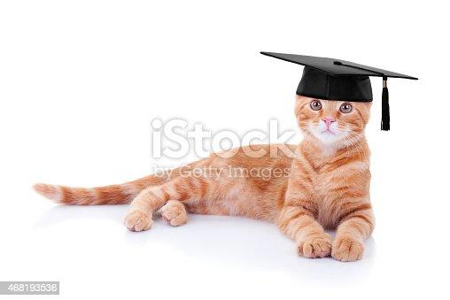 istock Graduation Cat 468193536