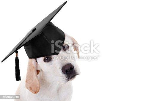 istock Graduation Graduate Dog 468863016