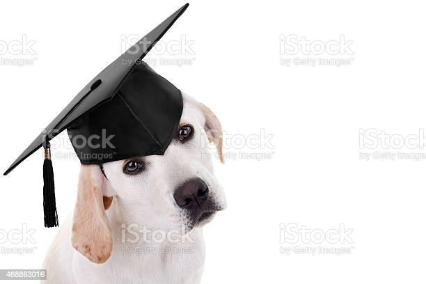 Graduation graduate dog picture id468863016?b=1&k=6&m=468863016&s=612x612&h=666hzb2xdrcdi0kl7r4nftlvirfnleid2a9ozidr1mc=