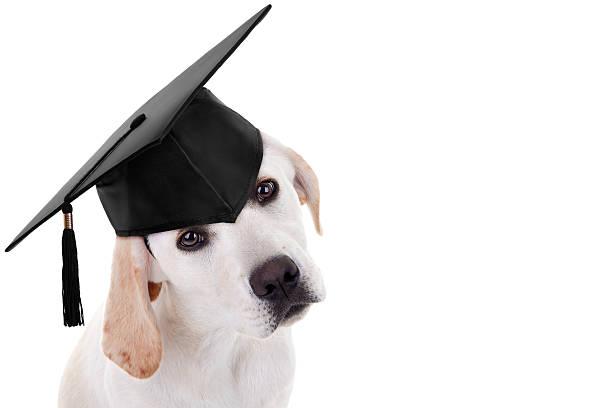 des jeunes diplômés de chien - dressage photos et images de collection
