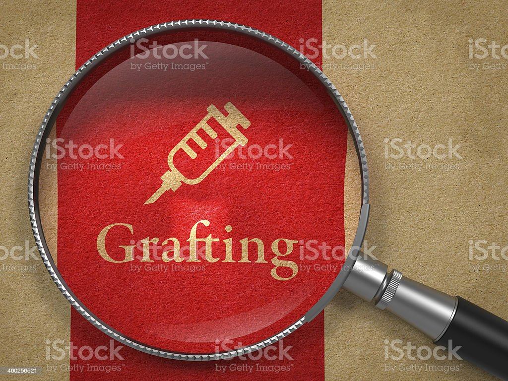 Grafting Concept: Magnifying Glass royalty-free stock photo