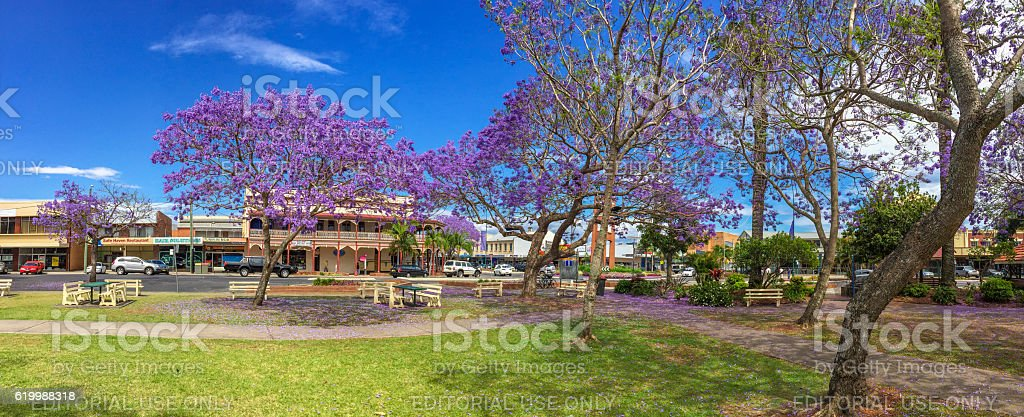 Grafton, NSW, Australia during Jacaranda Season in Spring stock photo