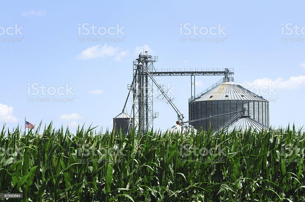 Grain Bins Over The Cornfield royalty-free stock photo