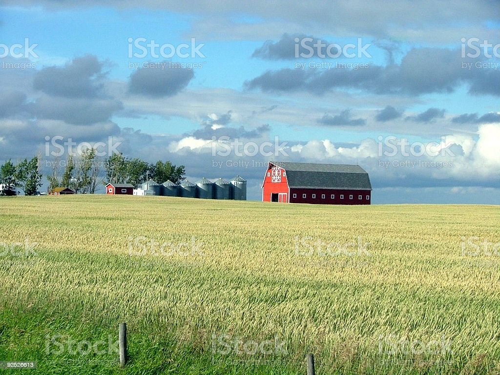 Grain Crop and Red Barn in Autumn royalty-free stock photo
