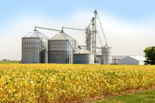 Grain bins and silos on a farm with soybean field in the foreground and sky in the background