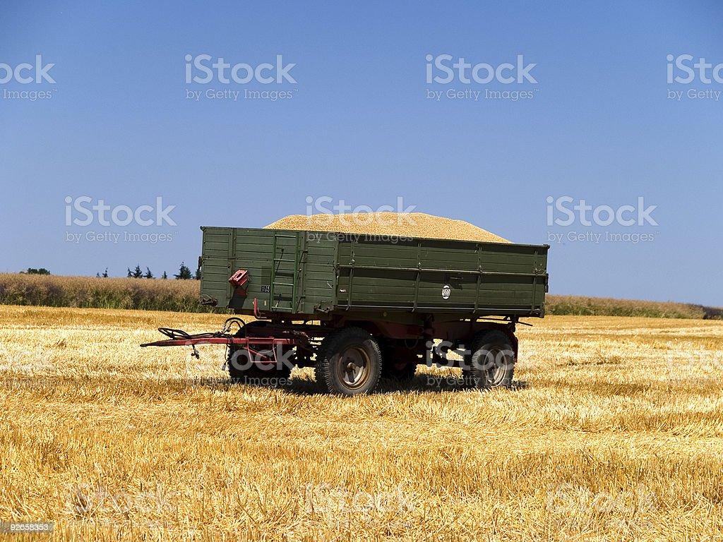 Grain harvest royalty-free stock photo