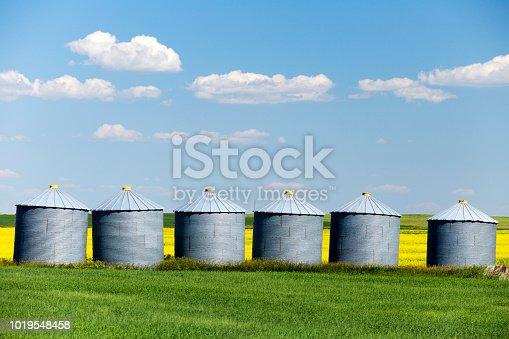 Grain silo storage containers in the prairie with yellow canola field near Edmonton, Alberta, Canada.