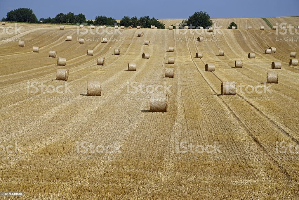 Grainfield royalty-free stock photo