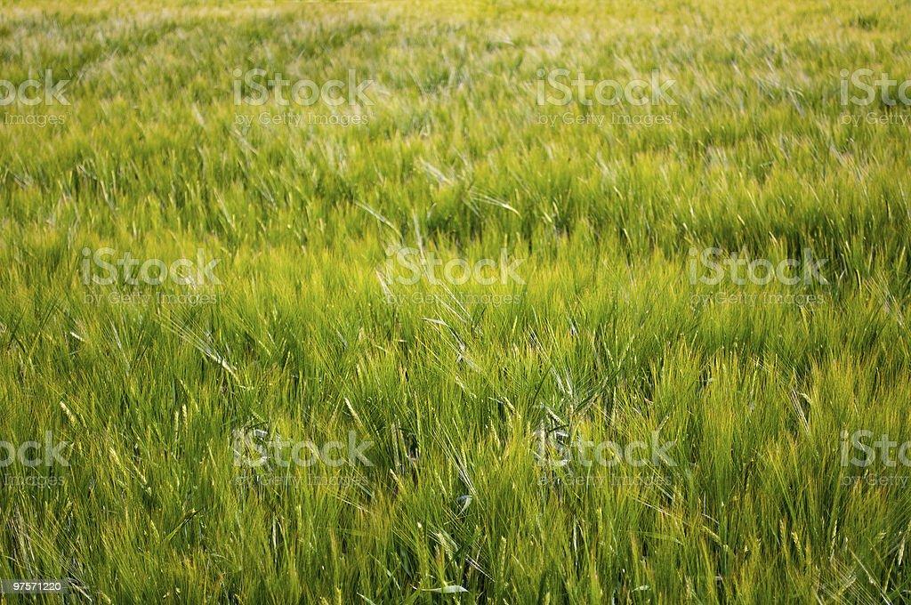 Fleur-field photo libre de droits