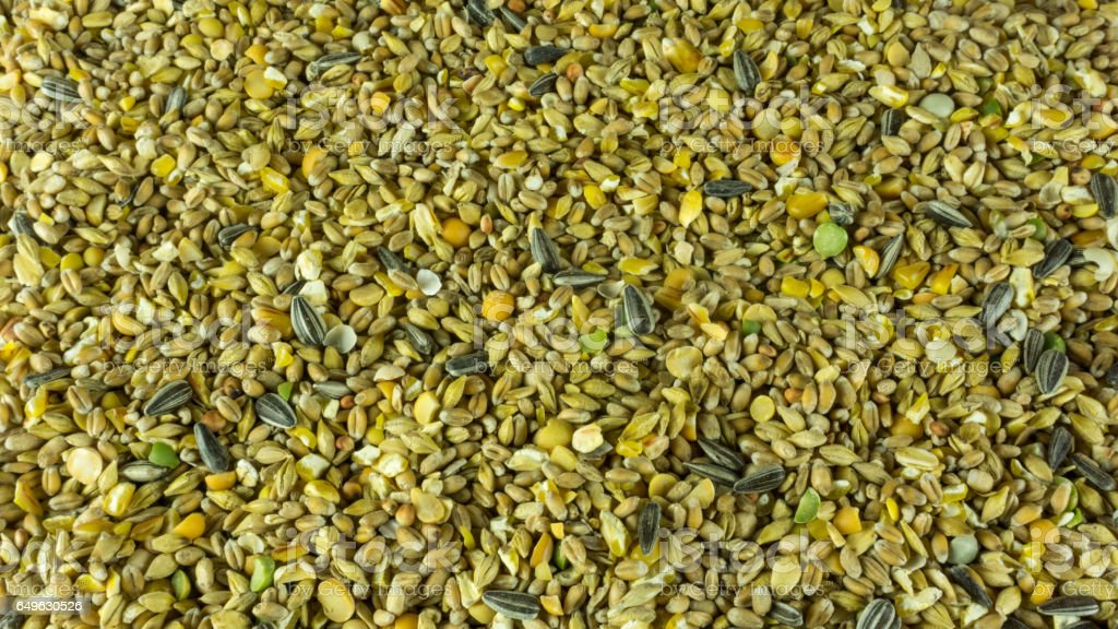 grains futter for birds and chickens stock photo