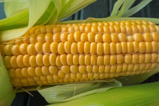 Grains of ripe corn. Concept aliment