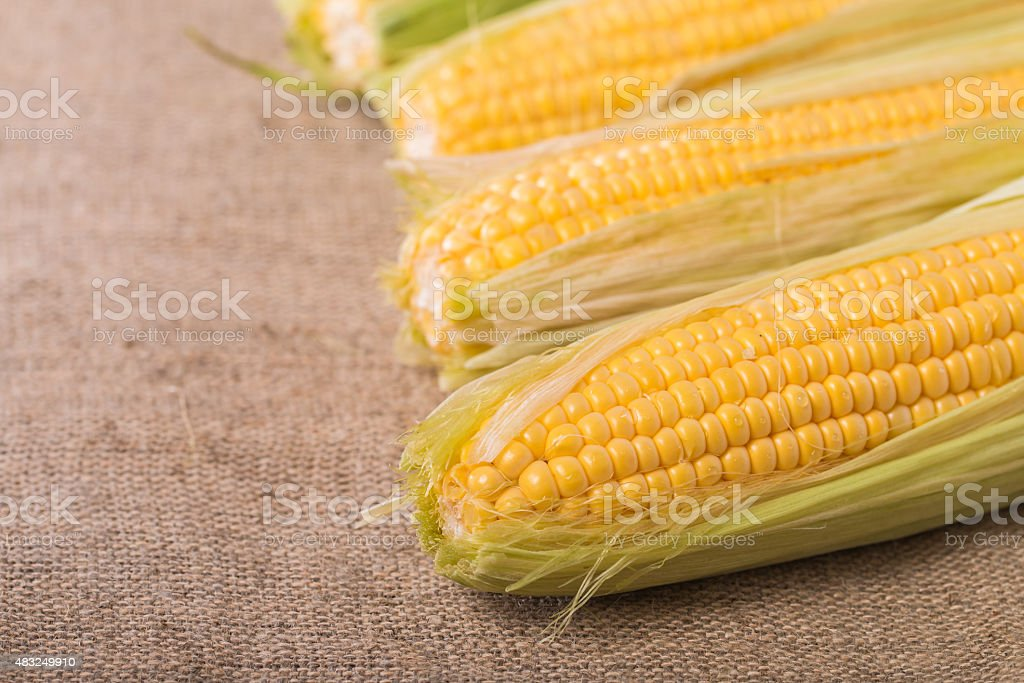 Grains of ripe corn stock photo