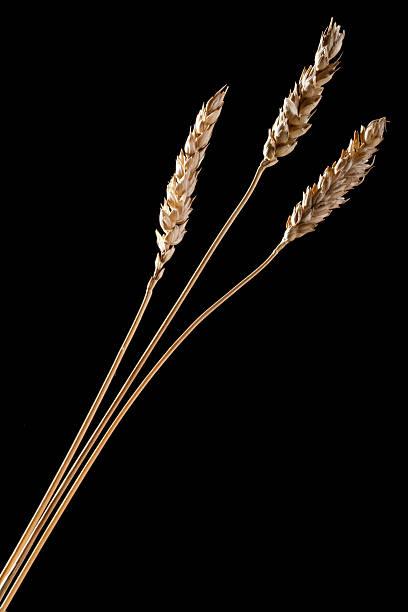 Weizen und Getreide – Foto