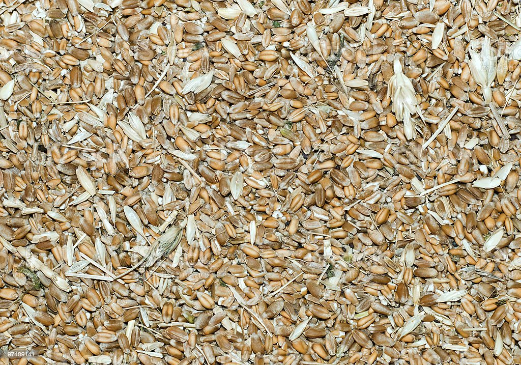 grains with husk royalty-free stock photo