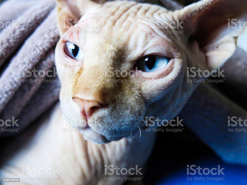 Gran Felino stock photo