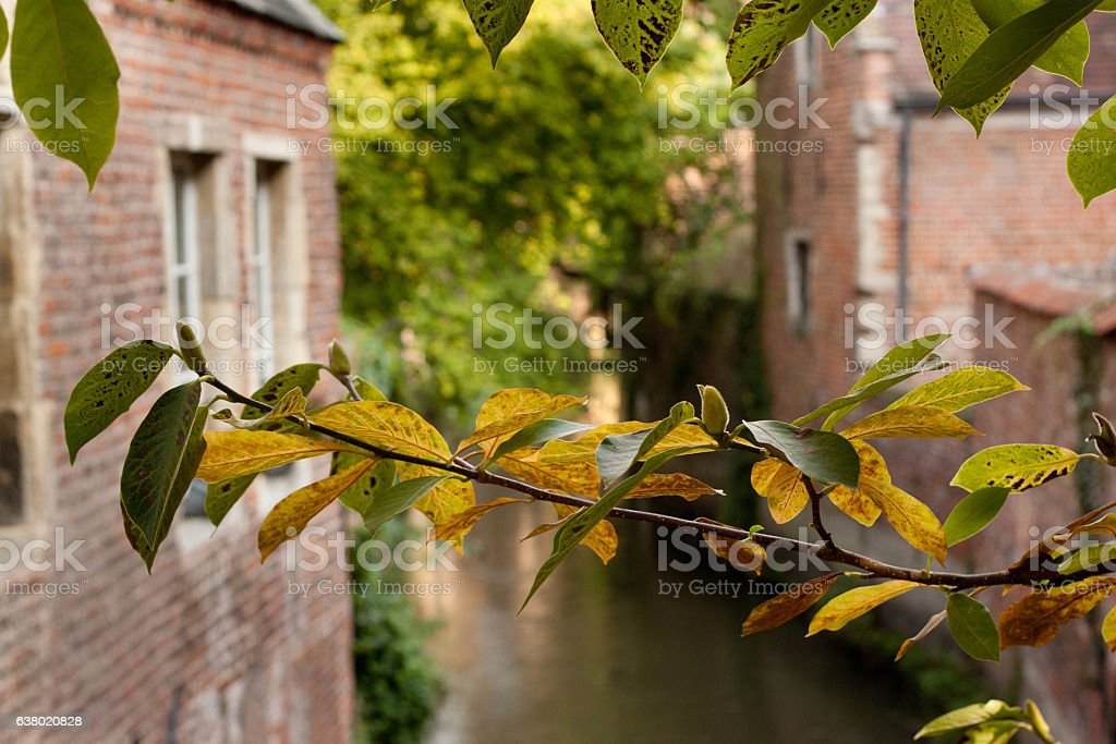 Grand Beguinage. stock photo