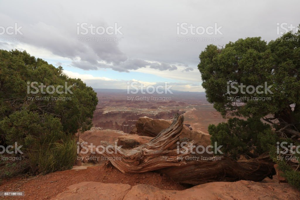 Grand canyon and bushes stock photo