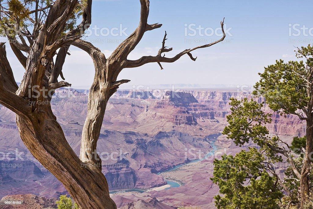 Grand Canyon and Juniper Trees royalty-free stock photo