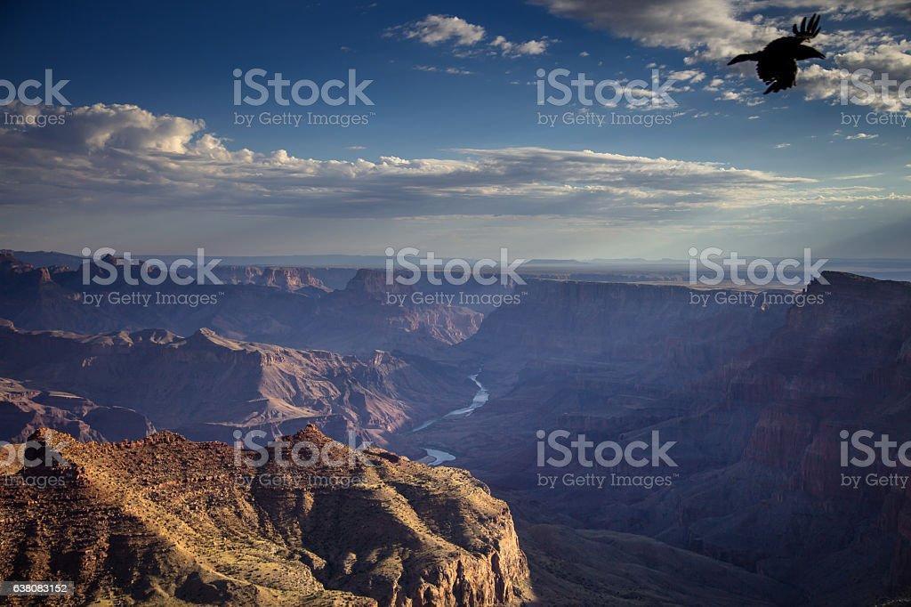 Grand Canyon Bird stock photo