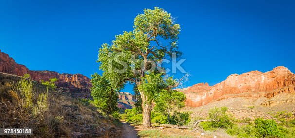 Panoramic view up the Bright Angel Trail to the green oasis of Indian Garden, Grand Canyon National Park, Arizona, USA.