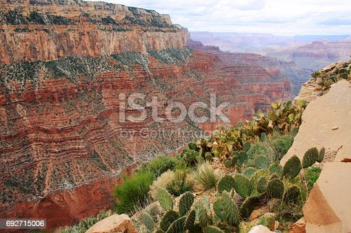 Cacti in the Grand Canyon. Amazing relief background in the Grand Canyon National Park, Arizona, USA. View from Kaibab trail, South Rim. Nature background.