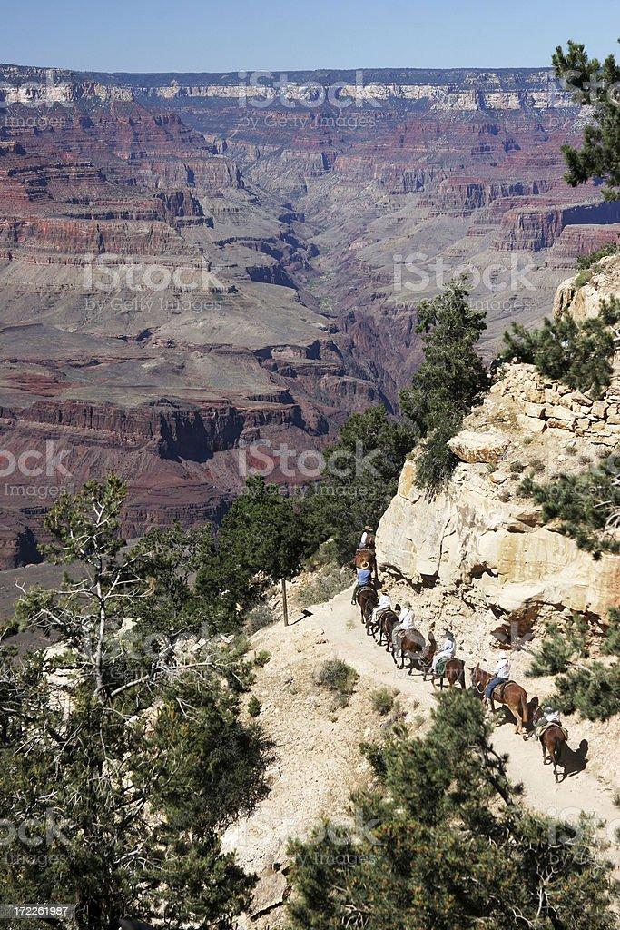 Grand Canyon - Mules royalty-free stock photo