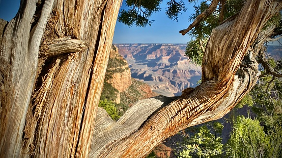 hiking in grand canyon national park, williams, az- usa