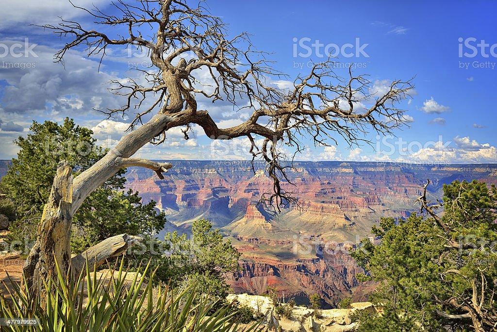 Grand Canyon panoramic view royalty-free stock photo